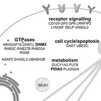 DP_genomics_pub_DNM3