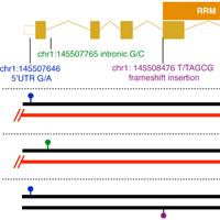 DP_genomics_pub_TAR