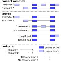 DP_genomics_pub_txrevise