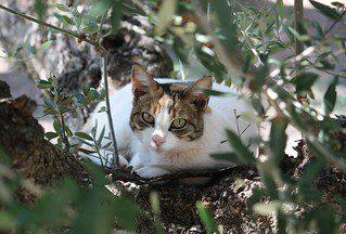 Cat under a tree