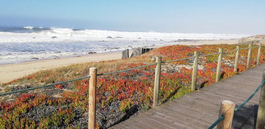 Inviting path along beach