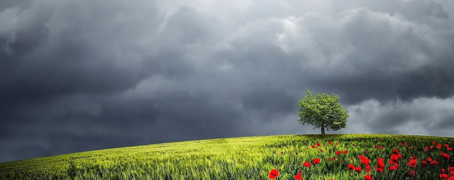 summer storm over field